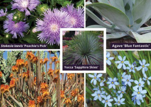 Drought tolerant plants gain popularity