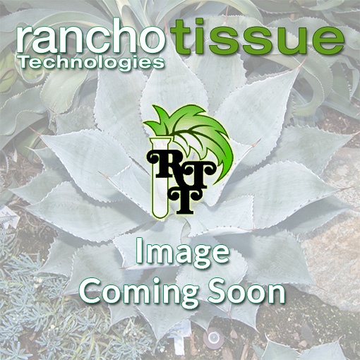 Rancho Tissue Image Coming Soon
