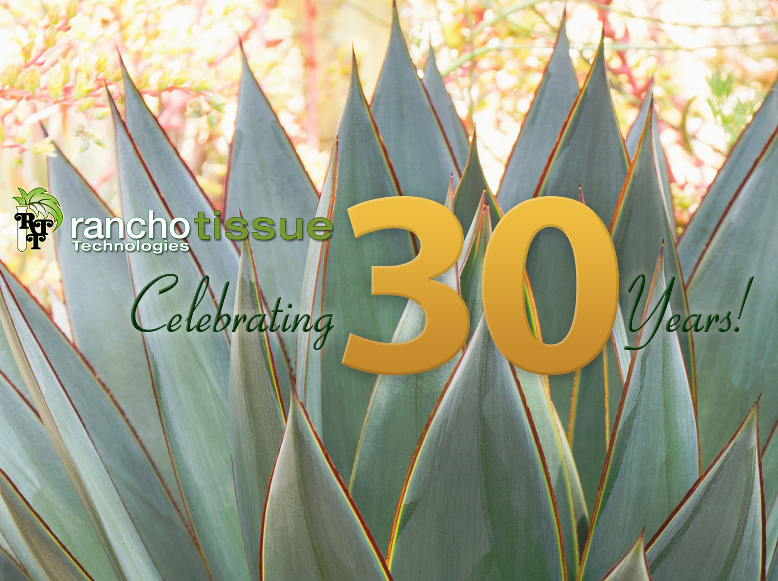 Ranchot Tissue Celebrating 30 Years!
